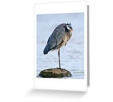 Juvenile Great Blue Heron - Ottawa, Ontario Greeting Card