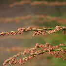 Grass Flower by sarah ward