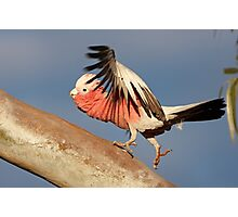 Galah ~ ♫♫ ♪ Lets do the time warp again ♪ ♪ ♬ Photographic Print