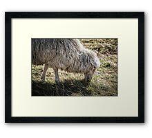 Sheep Grazing at Stonehenge Framed Print