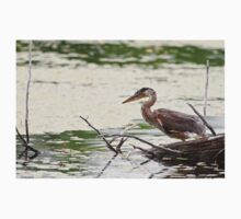 Baby Blue Heron on log - Ontario, Canada T-Shirt