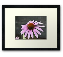 Pink Flower with bee Framed Print