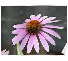 Pink Flower with bee Poster