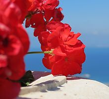 Red Flower by abbycohen