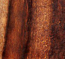 Bare Oak by Charissa May Borroff