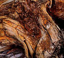 Bog Oak by Kenart