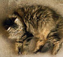 She Sleeps a Lot by Judy Olson