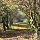 The Path by John Edwards