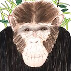 Charlie Chimp by David Roberts