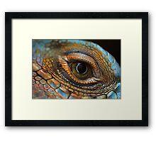Iguana eye Framed Print