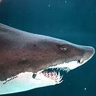 shark by Jenifer
