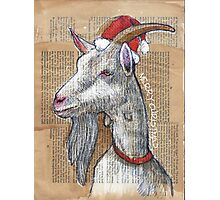 Christmas Goat Photographic Print