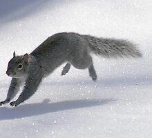 Bounding Squirrel by Raider6569