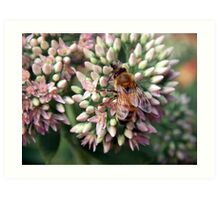 Honeybee Closeup Art Print