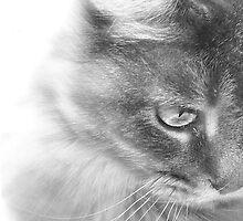 Angel Kitty by Rebekah  McLeod