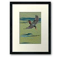 Green Heron In Flight Framed Print