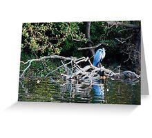 Ruswarp, and the elusive herons Greeting Card