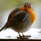 Robin IV by Rebecca Silverman
