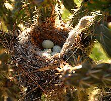"""Thorny Nest"" by David Lee Thompson"