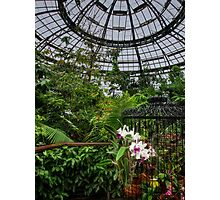 Tropical conservatory Photographic Print