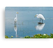 Great Egrets Canvas Print