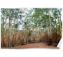 Survivors - Mount Buller National Park, Victoria Australia Poster