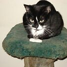 My Kitty by Becky Hartin