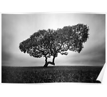 Napier Beach - Tree Poster