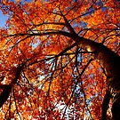 Autumn Tree by Annette Blattman