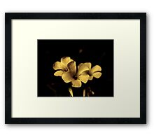 Experiments in a Sepia Flower Framed Print