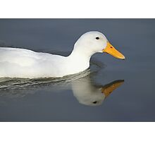 Duck Reflection, South Astralia  Photographic Print