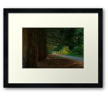 From the shadows Framed Print