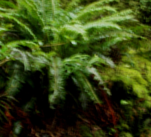 South Island rainforest New Zealand Sticker