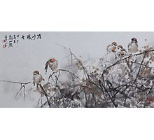 Chattering Photographic Print