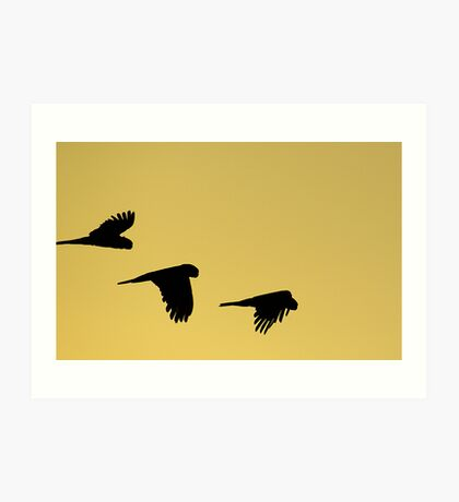 Heading Home to Roost Art Print
