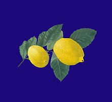 Two lemons on a branch with leaves. by KerstinB