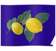 Two lemons on a branch with leaves. Poster
