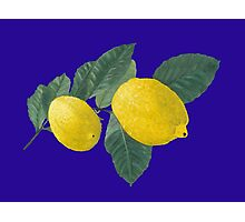 Two lemons on a branch with leaves. Photographic Print