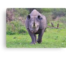 Black Rhino Bull - Powerful Me Canvas Print