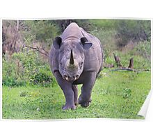 Black Rhino Bull - Powerful Me Poster