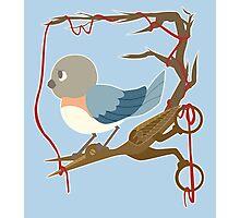 Twenty Birds with One Stone Photographic Print