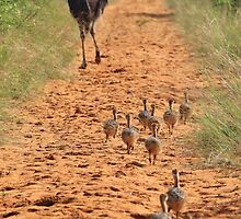 Ostrich Family - Running after Mom. by LivingWild