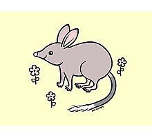 Pretty Bilby with Flowers Photographic Print
