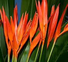 Heliconia by Maggie Hegarty