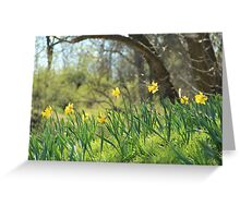Daffodils on a sunny spring day Greeting Card