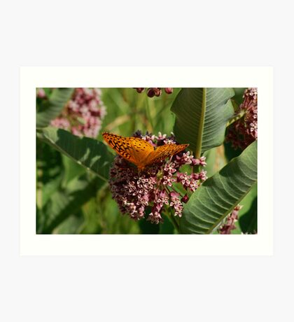 Wings Of Orange Art Print