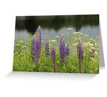 Lupin flowers at a lake Greeting Card