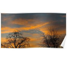 Yellow sunset and tree silhouettes Poster