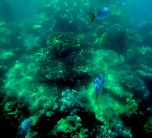 Snorkelling With Fish by Guyzimijz