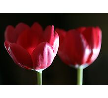 Tulip Duo Photographic Print